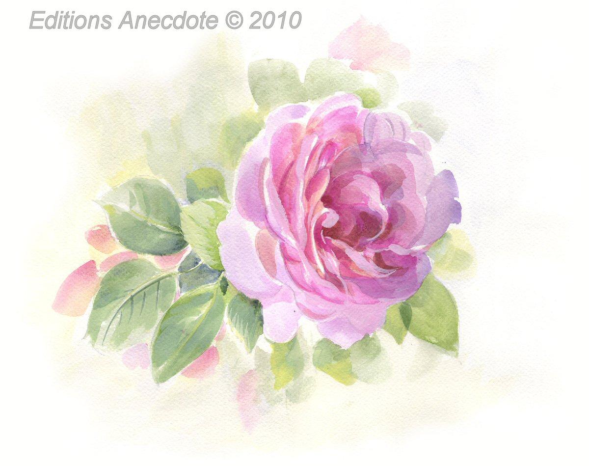 Editions Anecdote Carnets D Aquarelles Nature Roses Estivales